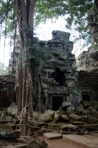Trees growing out of a collapsed gallery and tower