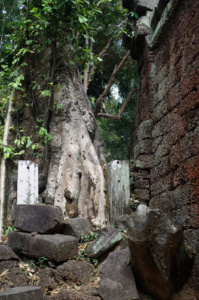 First view of a tree growing out of Ta Prohm
