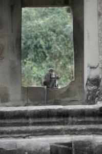 Monkeys in the window of Angkor Wat